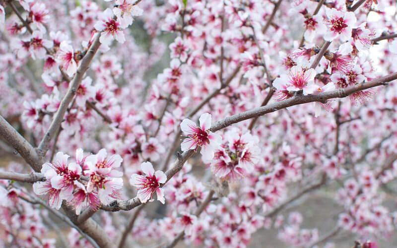 Inake-Conectar-con-la-Primavera