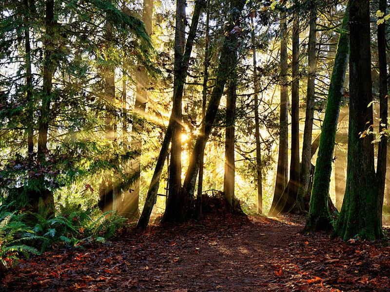 Habitarte cíclica-Baño de bosque